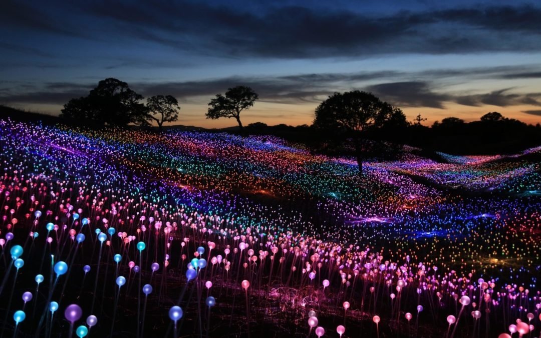 Miami attraction Fairchild Garden caught in legal lights as  British artist Bruce Munro files copyright infringement lawsuit